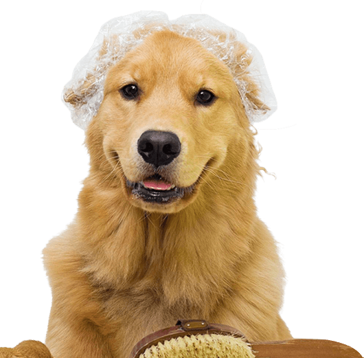 Clínica e Pet Shop - Centro Estético Bauru