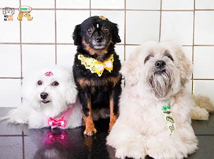 Clínica ProntoVet Bauru - Veterinária Pet Shop em Bauru