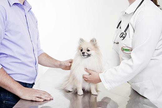 Exames Veterinários ProntoVet Bauru - Veterinária Pet Shop em Bauru