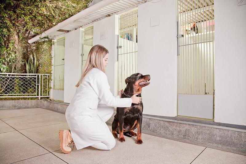 Hotel para pets ProntoVet Bauru - Hospedagem para Cães