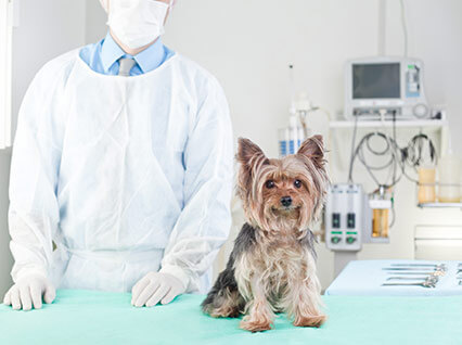 Clínica ProntoVet Bauru - Cirurgias Veterinárias em Bauru